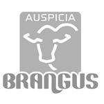 Auspicia Brangus