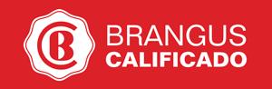 BRANGUS-CALIFICADO